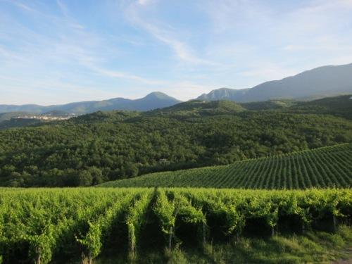 Kir-Yianni Xinomavro vineyards in Naoussa, Greece