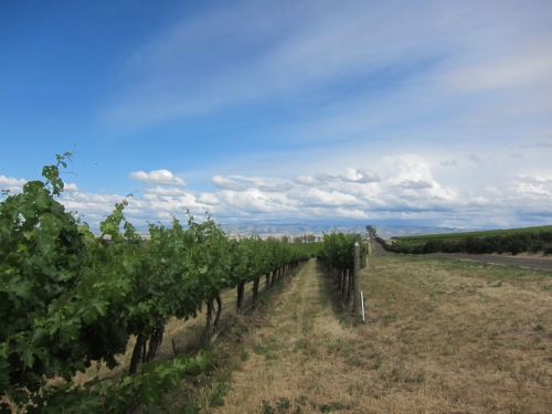 The historic Seven Hills Vineyard in Walla Walla, WA
