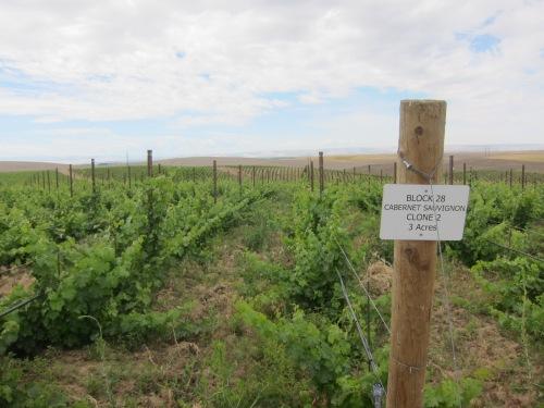 """New """"Eritage"""" Vineyard in Walla Walla, WA"""