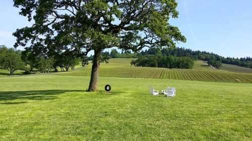 Stoller Vineyards, photo by Hayley Hamilton Cogill